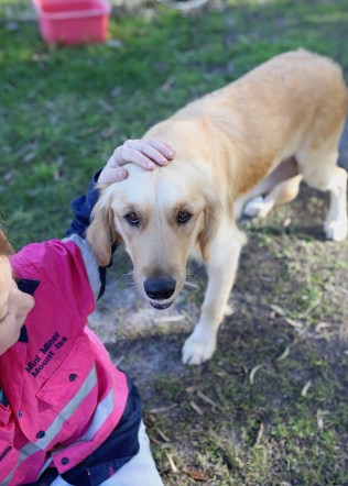 IVY - banskia park puppies - 1 of 50 (38)