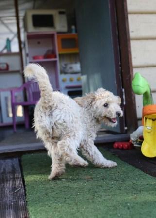 ZAG 1413 - Bankisa park puppies - 1 of 35 (26)