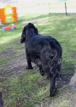 SWISH - Bankisa park puppies - 1 of 22 (12)