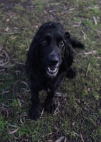 SWISH - Bankisa park puppies - 1 of 22 (18)