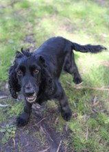 SWISH - Bankisa park puppies - 1 of 22 (3)