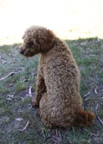 AJ - Bankisa park puppies - 1 of 47 (14)