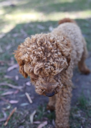 AJ - Bankisa park puppies - 1 of 47 (24)