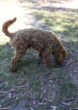 AJ - Bankisa park puppies - 1 of 47 (27)