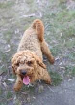 AJ - Bankisa park puppies - 1 of 47 (35)