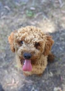 AJ - Bankisa park puppies - 1 of 47 (4)