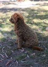 AJ - Bankisa park puppies - 1 of 47 (46)
