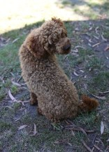 AJ - Bankisa park puppies - 1 of 47 (6)