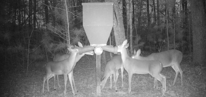 Attract Does During the Rut to See More Bucks