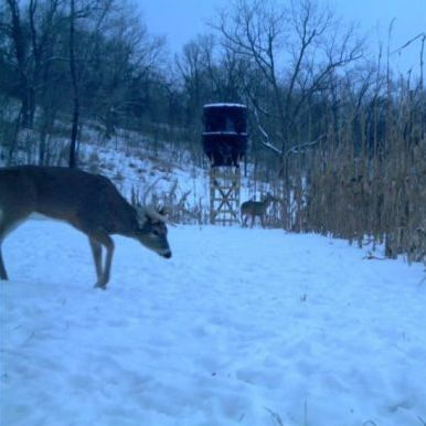 When deer hunting in cold weather, set up your blind or stand near a food source.