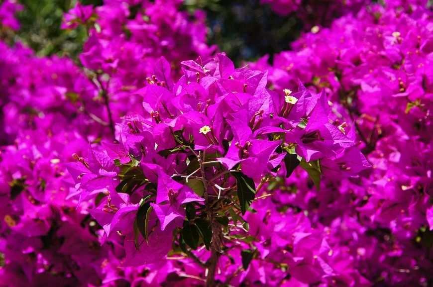 Cebule kwiatów