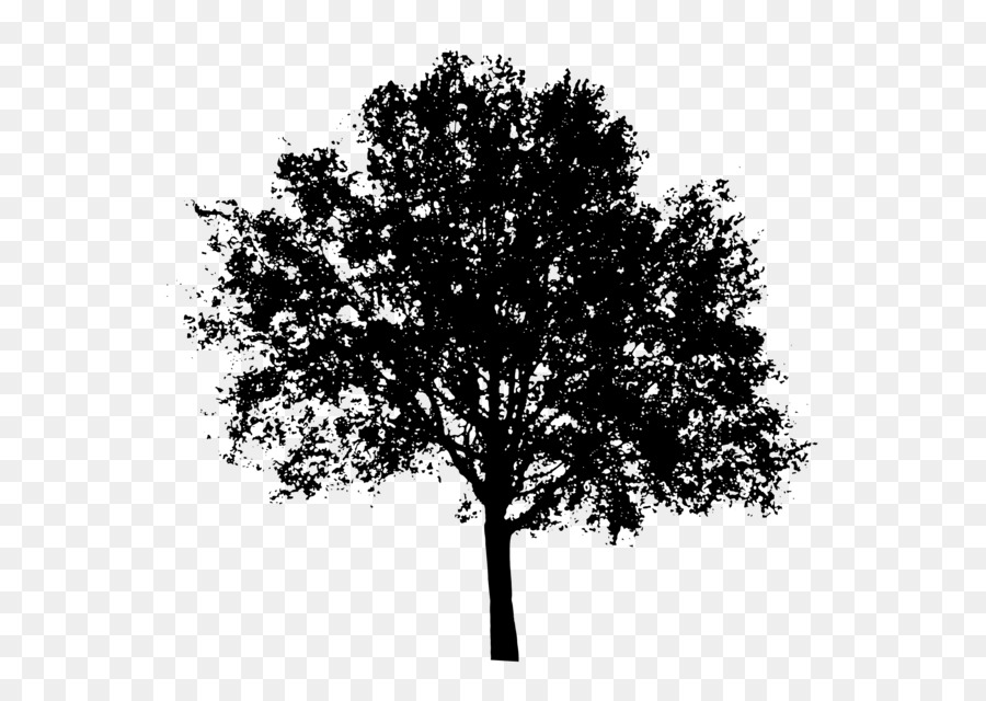 Oak Tree Silhouette Png Download 2400 1703 Free Transparent Tree Png Download Cleanpng Kisspng