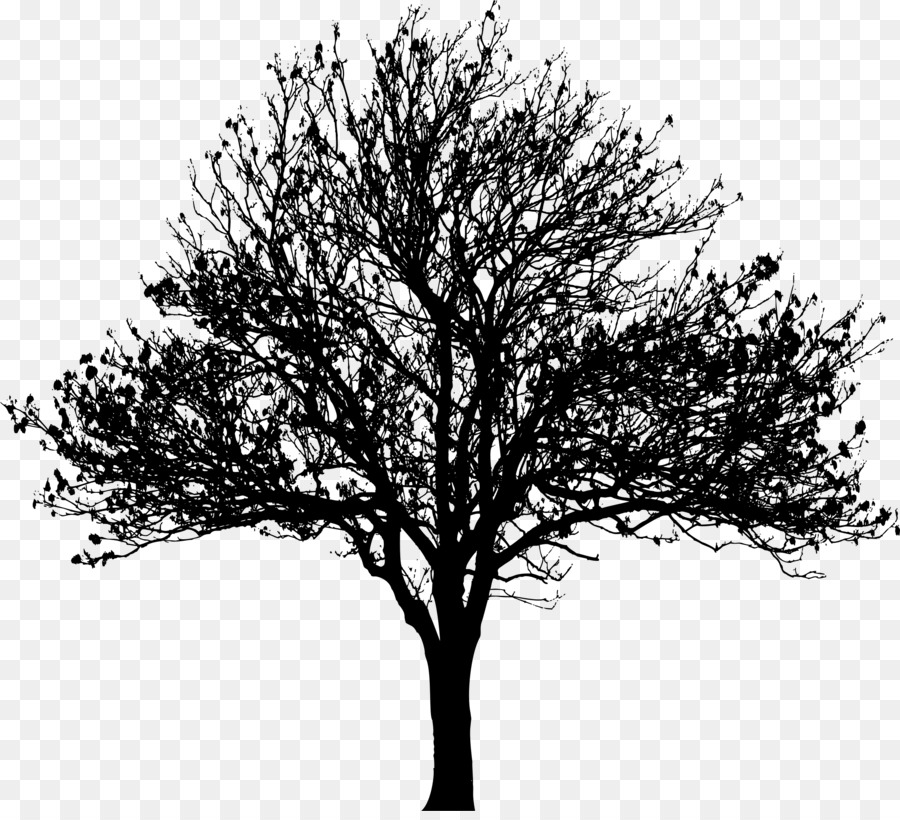 Oak Tree Silhouette Png Download 2289 2062 Free Transparent Tree Png Download Cleanpng Kisspng