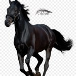Horse Cartoon Png Download 1123 1314 Free Transparent Andalusian Horse Png Download Cleanpng Kisspng