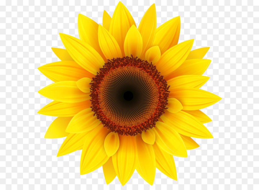 Common Sunflower Pixel Xcf Sunflower Png Clipart Picture 4000 4001 Transprent Png Free