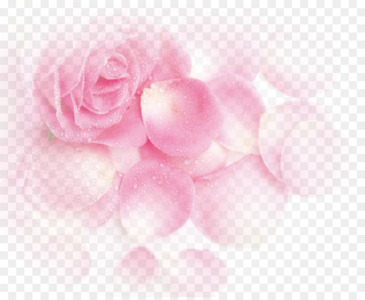 Garden roses Beach rose Pink Petal   Pink Dream Rose Flower Petals     Garden roses Beach rose Pink Petal   Pink Dream Rose Flower Petals
