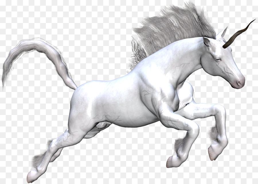 Kumpulan Contoh Sketsa Gambar Kuda Unicorn