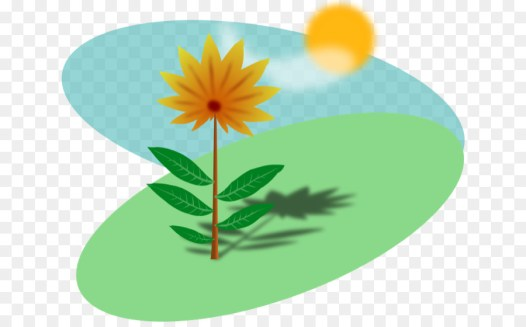 Image result for sunlight on plants clipart