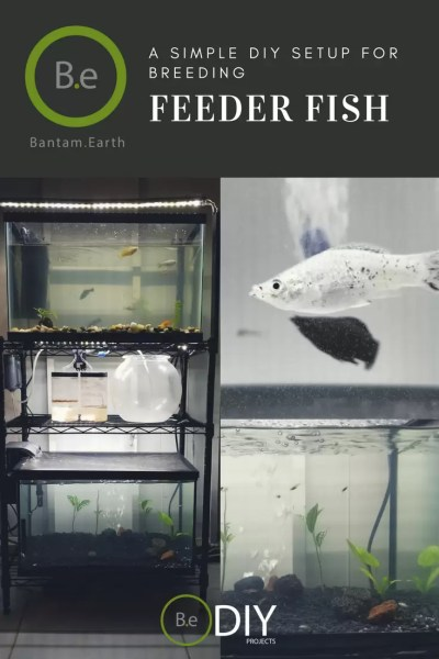diy feeder fish breeding setup