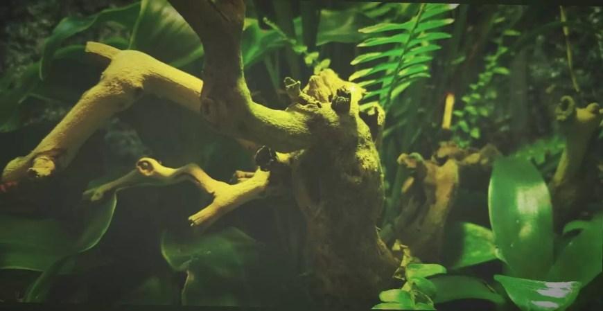green flora in paludarium