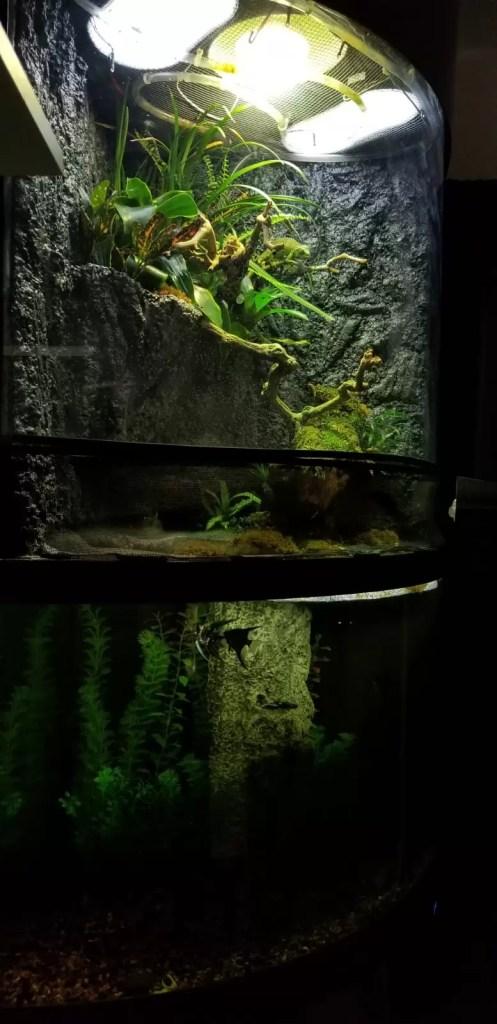 fully build paludarium with paludarium animals