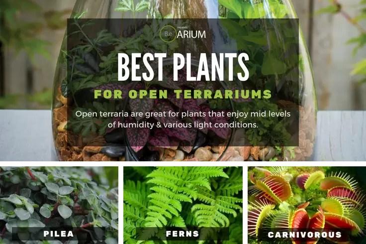 best types of open terrarium plants