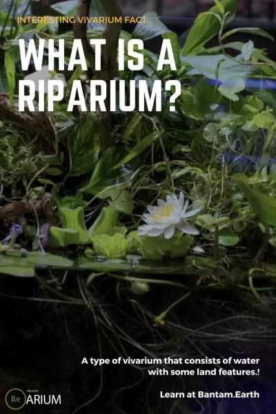 what is a riparium?