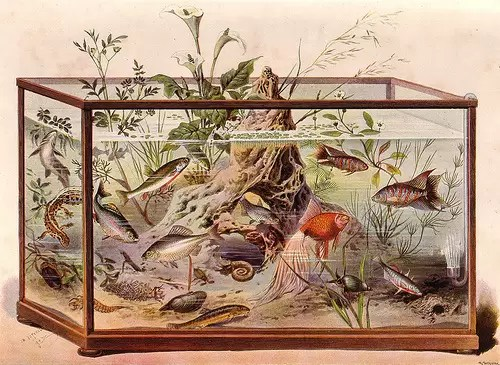 drawing of an antique aquarium