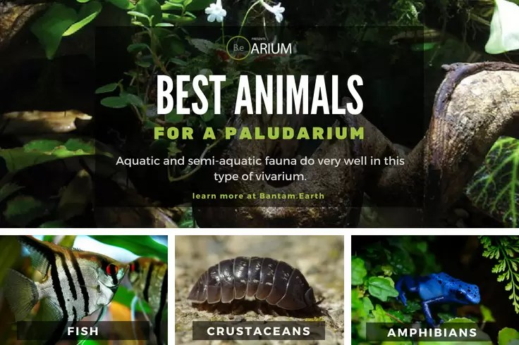 best types of paludarium animals