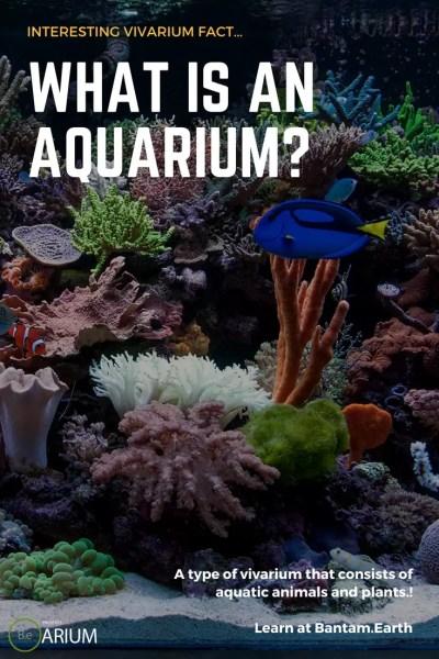 what is an aquarium?