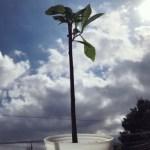 バオバブの木に水やり2018.10.27