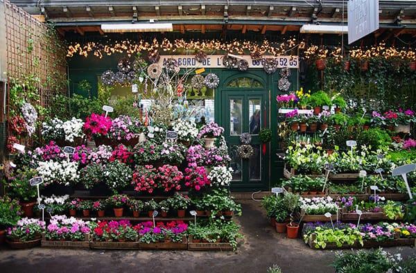 kinh doanh hoa tuoi dep