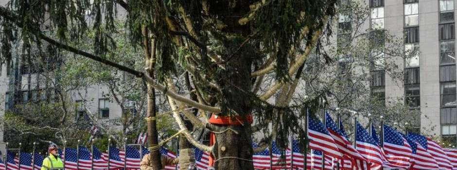 Inician instalación tradicional árbol Navidad