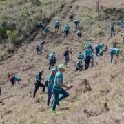 Edenorte y  Plan Sierra en jornada reforestación