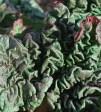 Gröna vindlingar.