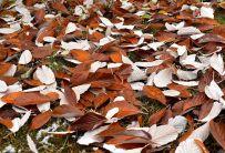 Nyfallna löv