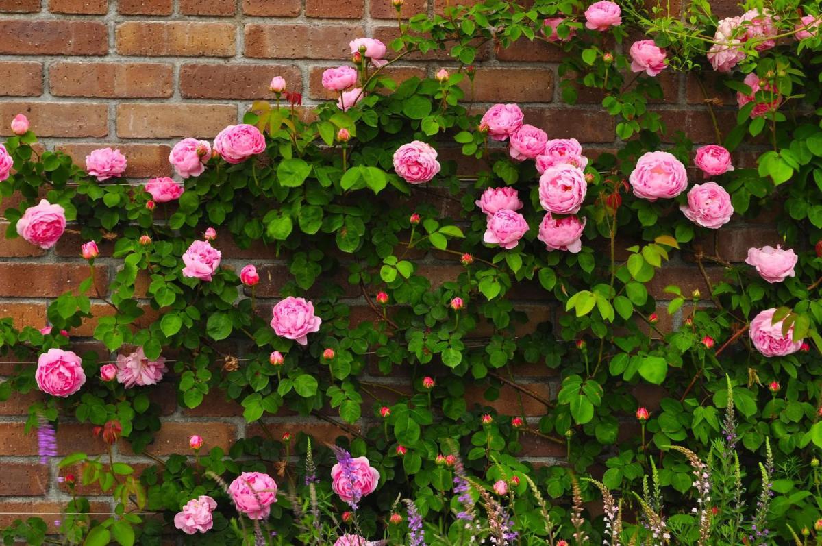 敷島公園ばら園のバラの見ごろやバラまつりとバラ園情報