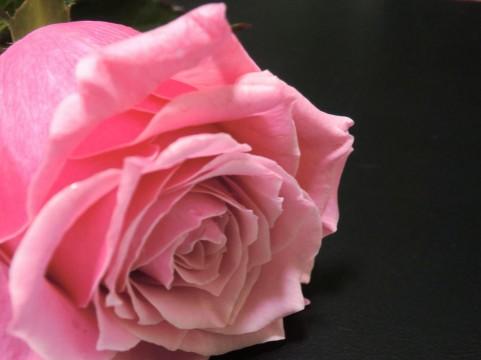 双松バラ園のバラの見ごろやバラまつりとバラ園情報