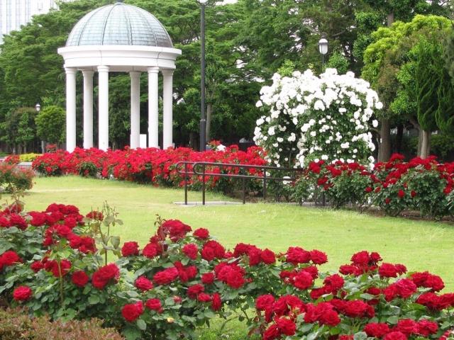 ヴェルニー公園 バラ見ごろ