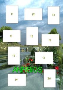 albumvertebrados