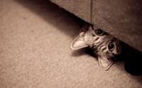 Resultado de imagen de gato escondido