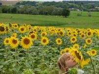 zonnebloemvelden en een communieprentje