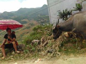 C tekt vaak foto's op de fiets, soms leuke taferelen zoals deze buffel met herder met kind op zijn rug.
