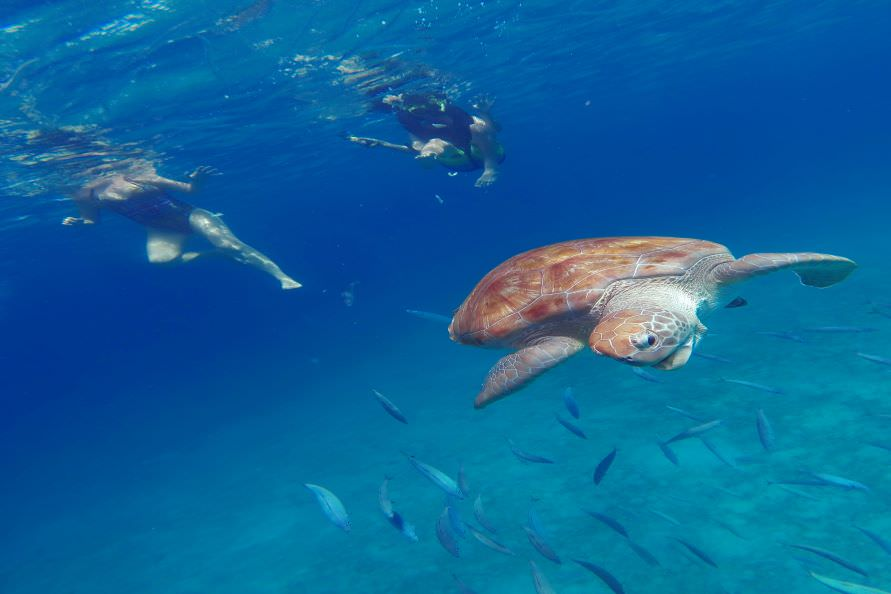 Boat Tours & Swim with Turtles!