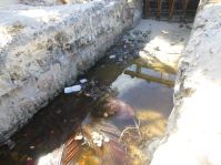 Garbage in the canal at Graeme Hall wetland and Ramsar site