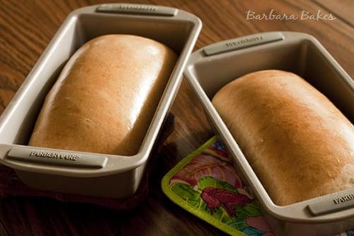 Honey-Whole-Wheat-Bread1
