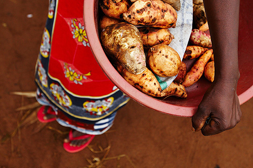 Child carrying a basket of sweet potatoes