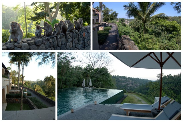 Collage of trip photos. We arrived at the hotel in the late afternoon and were immediately greeted by a barrel of monkeys. It was an amazing experience to be able to get so close to the monkeys.