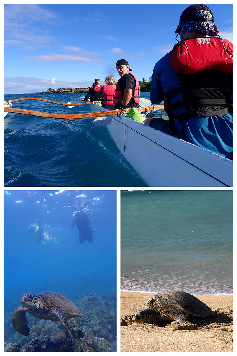 collage of South Maui Turtle Town Outrigger Canoe Tour