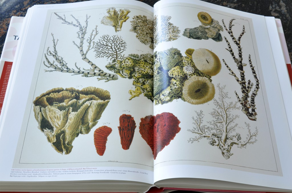 Cabinet of Natural Curiosities - Corals